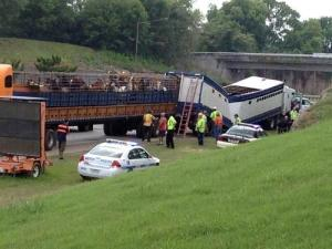 Horses killed in tractor trailer accident transported Three Angels Farm. WSMV-TV.