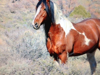 Popular Paint Mustang who was found shot to death.
