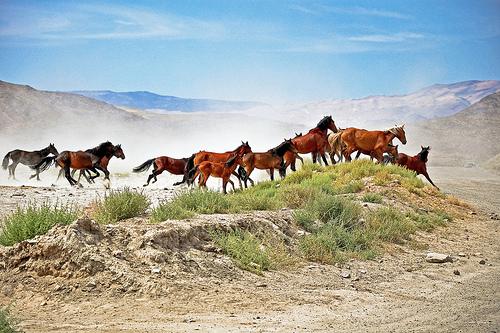 Kids too close to wild horses   TUESDAY'S HORSE