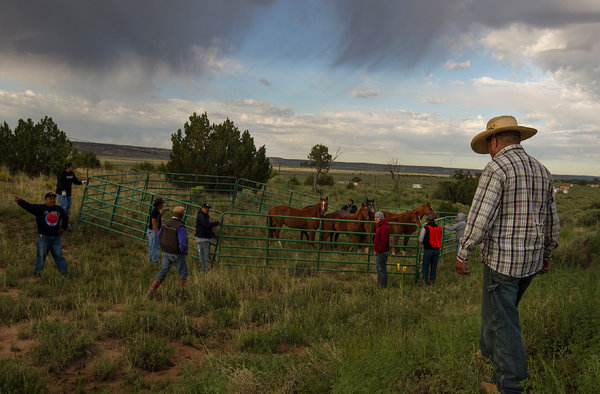 A feral horse roundup in August in Manuelito, N.M. The Navajo Nation hired the wranglers.  Photo: Diego James Robles.