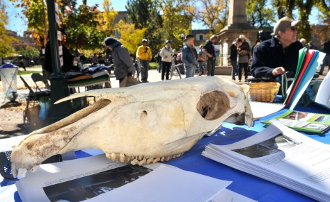 The skull of a slaughtered horse at Thundering Hooves in NM. Photo by Eddie Moore/Albuquerque Journal.