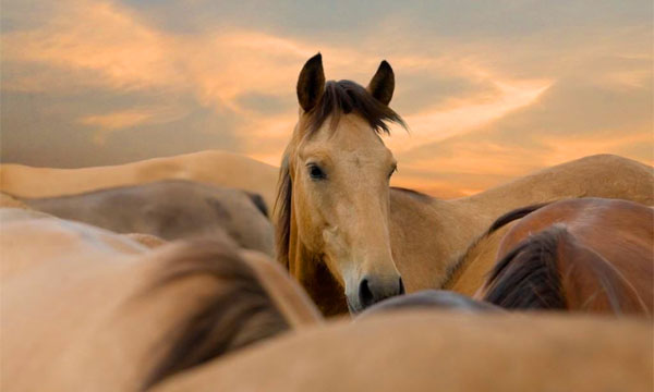 Horse in center of herd.