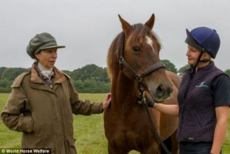 Princess Anne gives a friendly pat to a horse, but is she really trying to size you how much on the hoof he may be worth for his meat? World Horse Welfare photo.