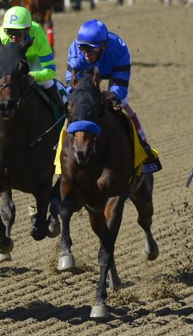 Baffert-trained Secret Compass (in blue) broke down and was euthanized in the 2013 Breeders Cup Juvenile Fillies Race (for 2 YOs). Photo Credit: Mark J Terrill/AP.