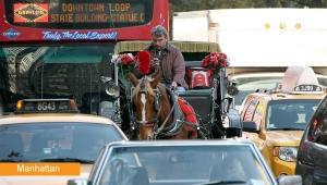 Carriage horse in NYC traffic. Google image.
