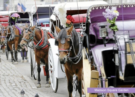 Carriage horses, Madison Square Garden. Google image.