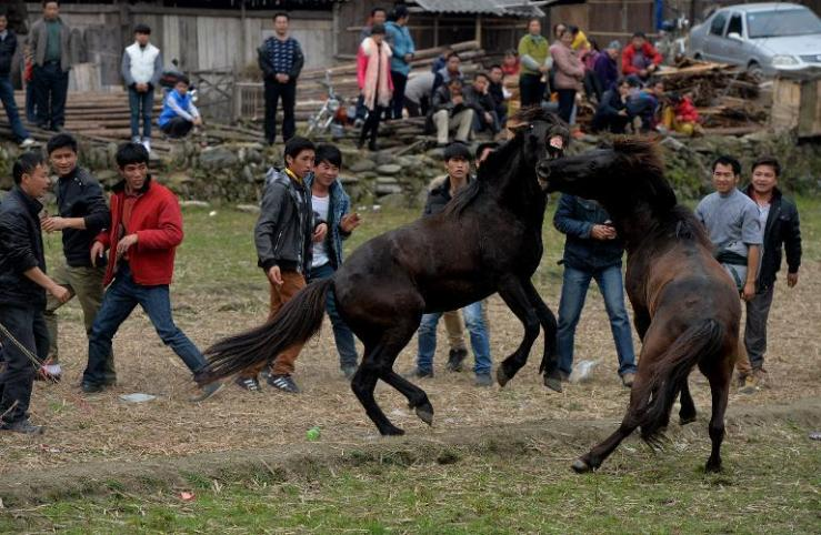 Hooves clash in mid-air, a stallion bites his opponent while delighted spectators cheer wildly -- in southern China some saw in the Year of the Horse by watching the animals fight. AFP Photo via Yahoo Sports.