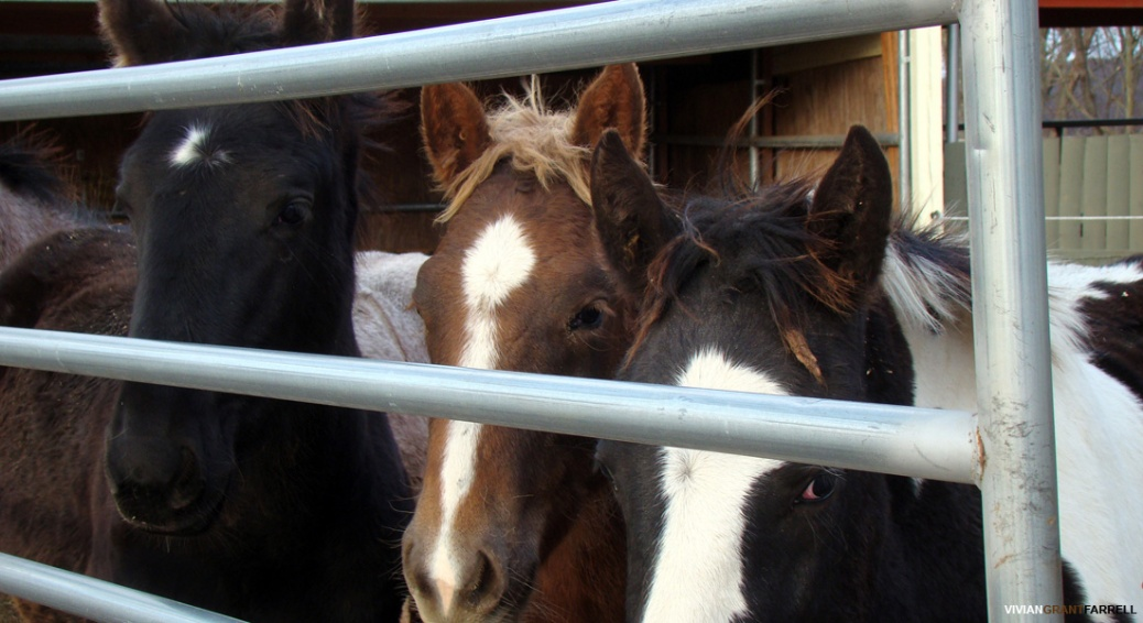 Combating horse cruelty   a full time job