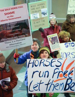 Wild horse cull protesters Alberta, Canada. Photo Brent Calver, Calgary Sun.