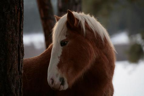 A Wild Horse In The Snow Covered Ochoco. Photo by Melissa Farlow.