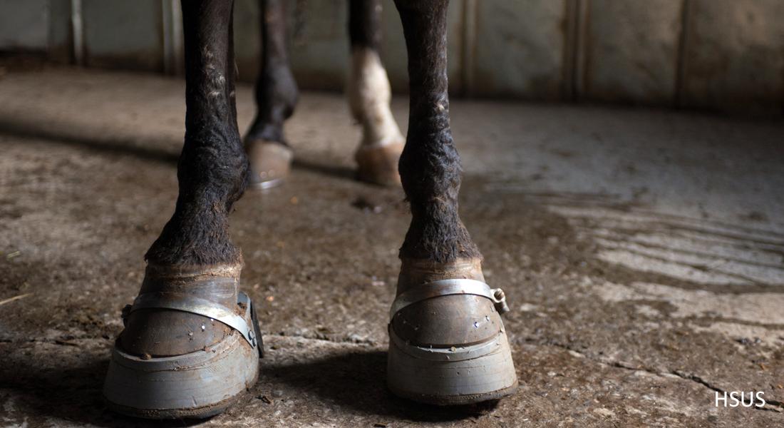 2014 march meet pics of horses