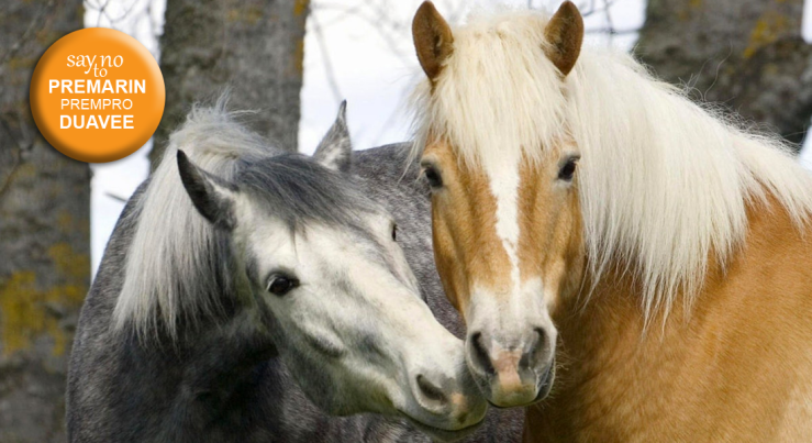 March for Premarin Horses featured image.
