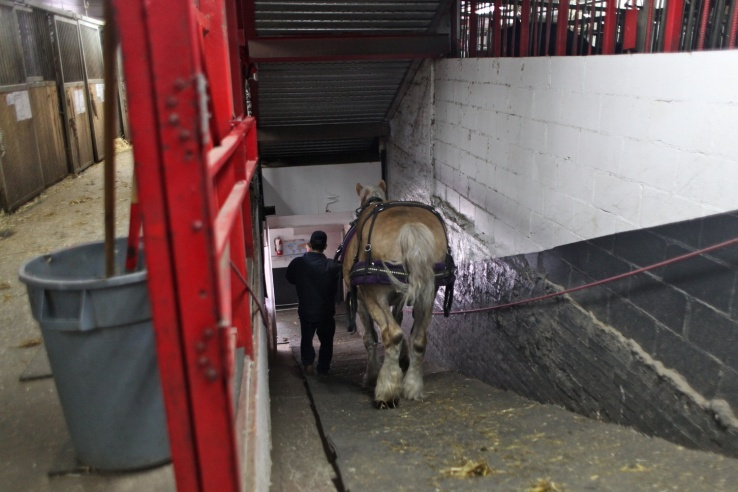 A horse is led down the ramp at the West Side Stables in New York City. (Amy Pearl/WNYC)