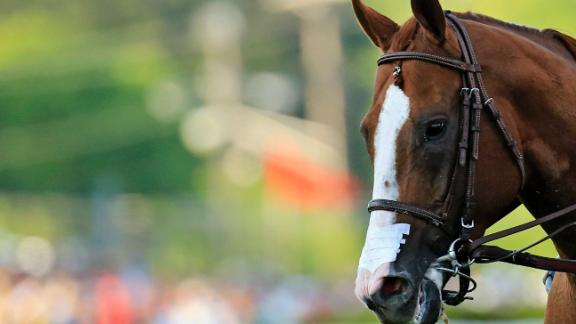 Pictured: California Chrome wearing the now infamous nasal strip.New York racing officials threw out the rule banning the apparatus as a favor to the connections of the Triple Crown contender. A three-year-old filly, who would not have been allowed to wear a nasal strip while racing in New York, collapsed and died at Belmont Park where the third and final leg of the Triple Crown will be run next month.
