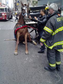 PHOTO: GARTH BURTON Fallen carriage horse, New York City.