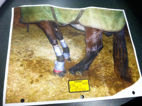 Wheelon cruelty case photographic exhibit.