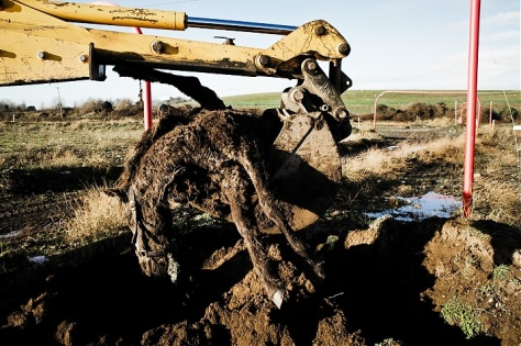 PHOTO CREDIT: PIOTR MALECKI Dead abandoned horse is dumped in a Dunsink landfill, Ireland.