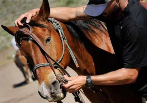 A member of U.S. Special Forces readies his mount. U.S. forces train to be combat-ready on horseback, if necessary, as it was in Afghanistan.(Photo: Jack Gruber, USA TODAY)