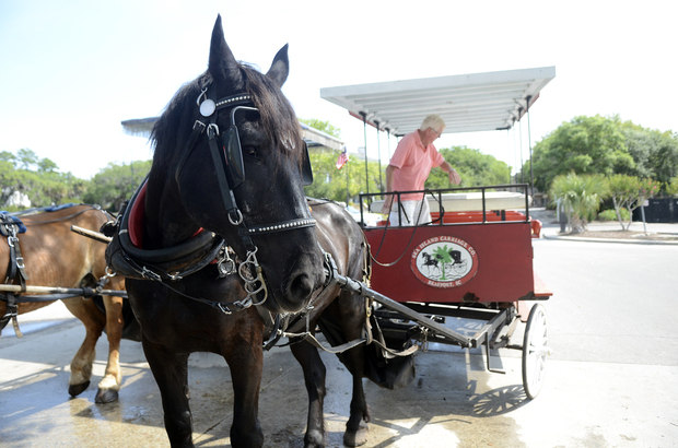 Merlin, a carriage tour horse with Sea Island Carriage Co., is shown Saturday near the water trough in the Beaufort Downtown Marina parking lot near Henry C. Chambers Waterfront Park. Reports of unexpected falls by the horse have city officials worried about Merlin's safety and that of people nearby. DELAYNA EARLEY — Staff photo.