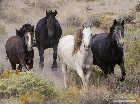 PHOTO CREDIT: CAROL WALKER Adobe Town Mares in 2010 Roundup