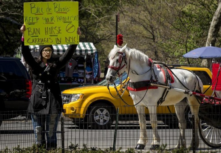 A protester holds up a sign against horse-drawn carriages at Central Park in New York April 24, 2014. Protesters gathered in Central Park to protest against horse-drawn carriages, calling on New York City Mayor Bill de Blasio to keep his campaign pledge to ban carriages in the park.