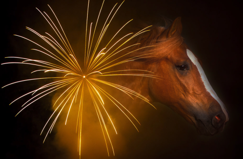 Horse and Fireworks Image