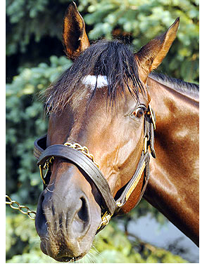 Thoroughbred Racehorse, PRIME CUT.