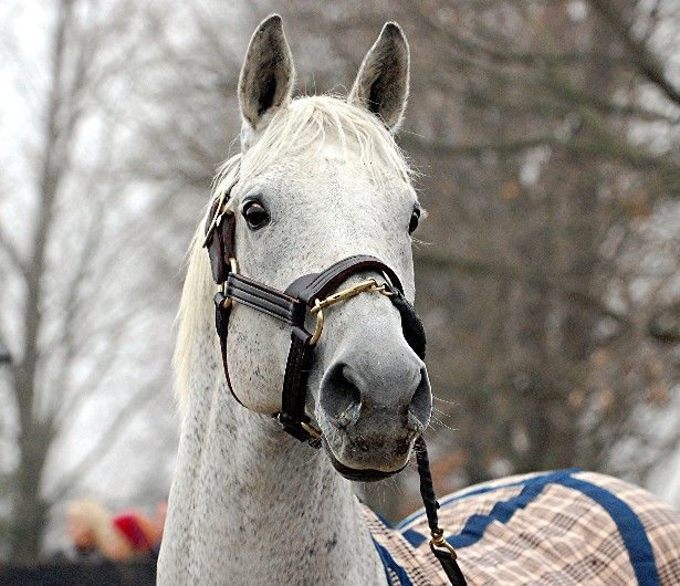 silver charm old friends tuesday s horse