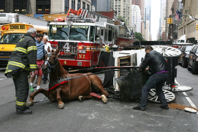 Carriage horse accident NYC Sept 26, 2013.