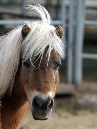 PMU foal