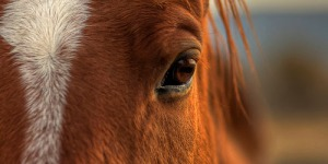 Celebrating the soulful eyes of the horse—The Look of Love