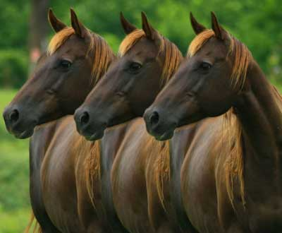 Three identical horses. by Pixgood.com.