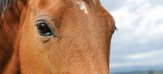 Horse portrait.