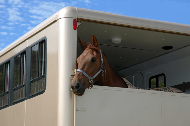 Horse gazing out of horse box. Google image.