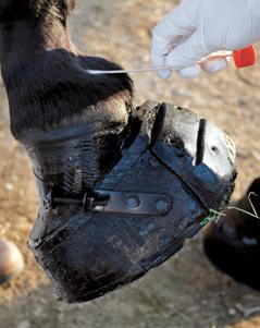 Horse soring stacked shoe.