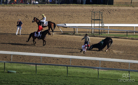 Eight Belles falls to her chest as she fractures both front legs after crossing the finish line in the 2008 running of the Kentucky Derby.