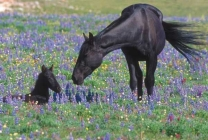 Mother's Day Mares and Foals