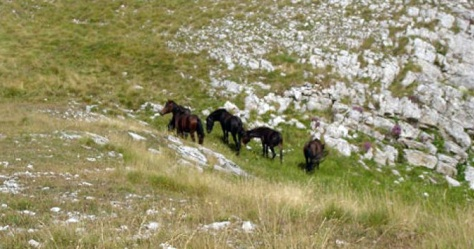 Wild Horses, Greece. Photo source: Huffington Post.