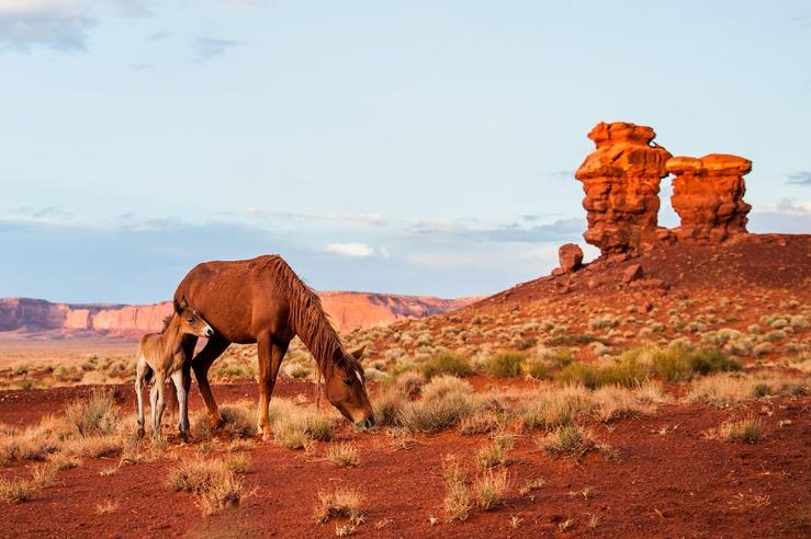 Navajo wild mare and foal. ScenicAperture.com.