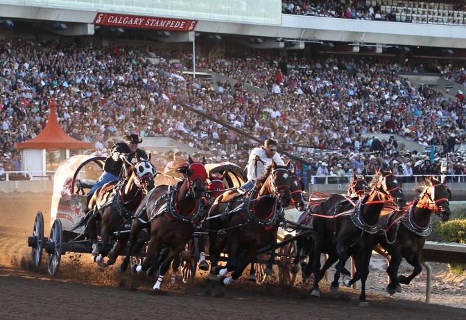 Chuckwagon race. Google image. Canada.