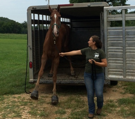 Glimmer unloading following rescue. Image: HorseHumane.org.