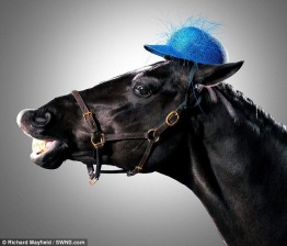Horses with Hats On. Richard Mayfield.