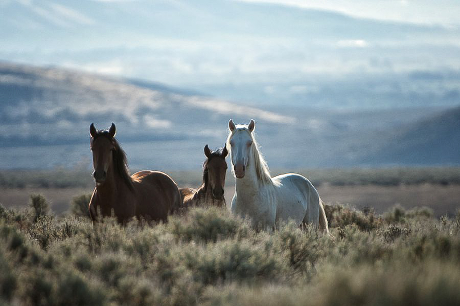 Wild Horses: Randy Harris Photo