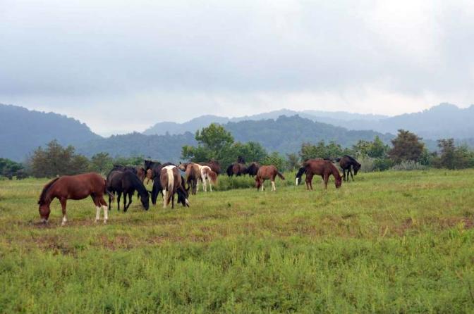 wild and free roaming horses of Eastern Kentucky. Image courtesy of Kentucky Humane Society.