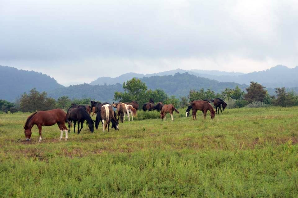 wild and free roaming horses of Eastern Kentucky. Image courtesy of Kentucky Humane Society.