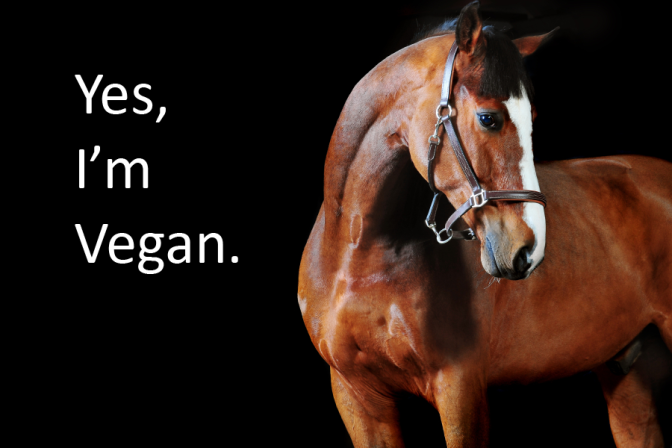Yes, I'm Vegan says a horse in this Tuesday's Horse artwork. Photo of horse is a free use image according to internet labeling.