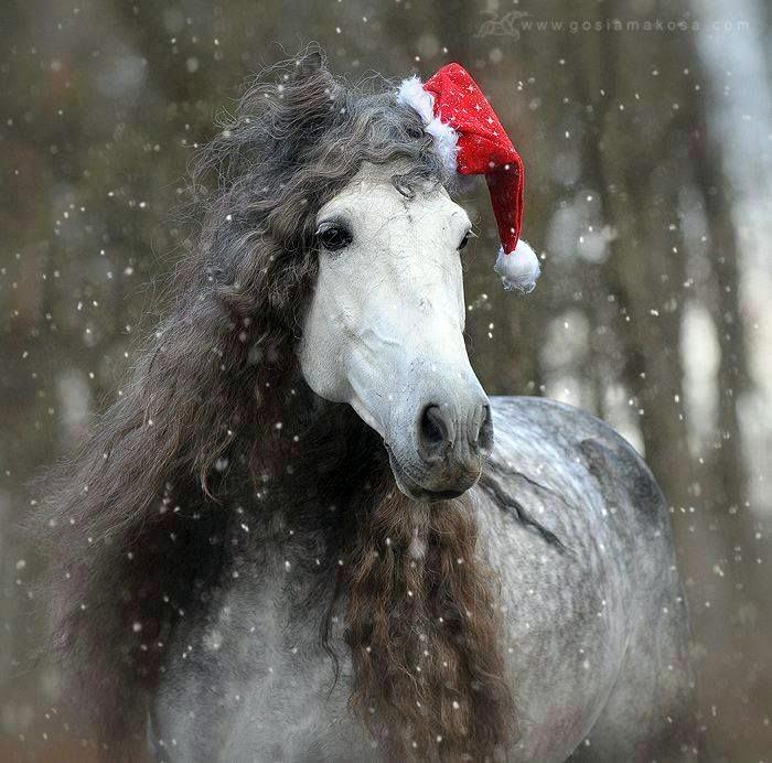 horse-wavy-mane-santa-hat