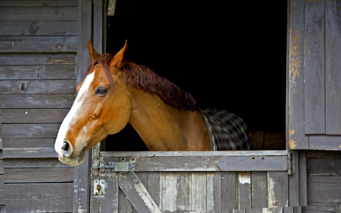 Boarding Barn Confidential: Biggest Pet Peeves