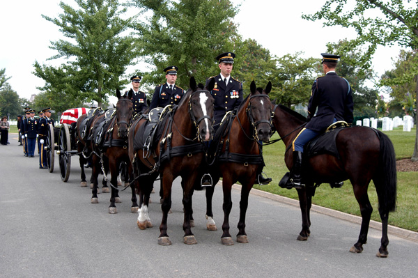 Caisson horses, Arlington National Cemetary.