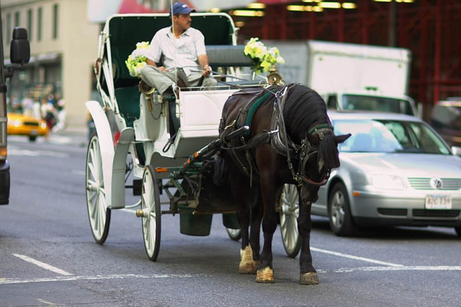 Compromise carriage horse plan for NYC falters when Teamsters withdraw support